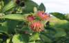 8-ways-you-can-use-and-love-burdock-jpg